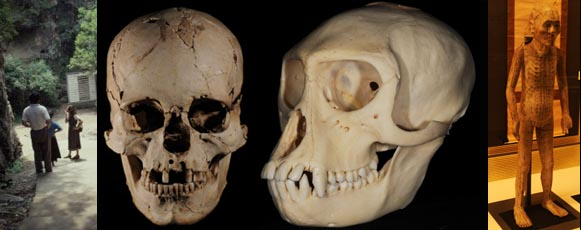 palaeoanthropology research resources | data files | ct scan